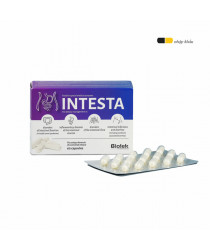 INTESTA - Đại tràng, tiêu hoá, ruột kích thích